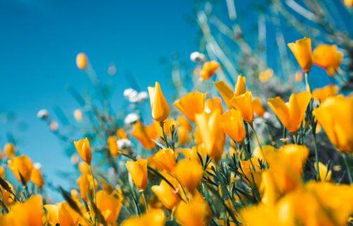 vergelijk bloemen via bloemenbutler